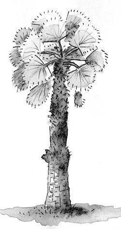 la-06-tree-venicebeach
